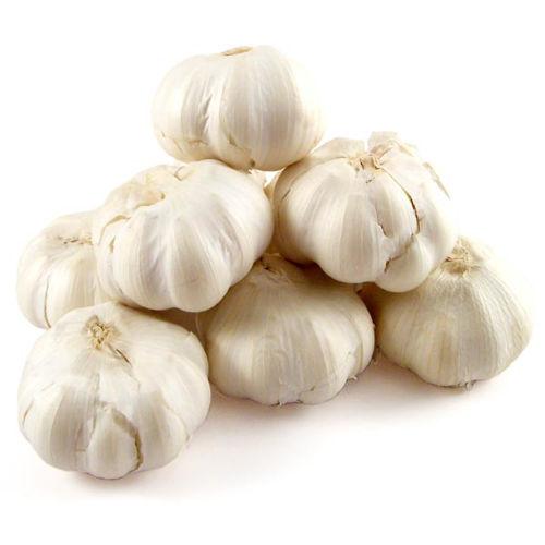 Buy Garlic Online