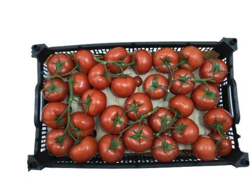Buy Tomato Box Online