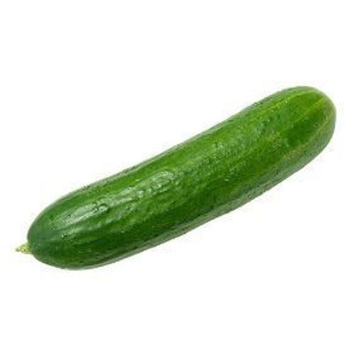 Buy Cucumber Online