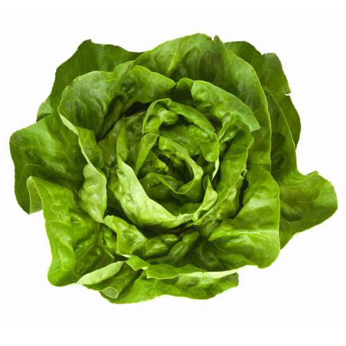 Buy Boston Lettuce Online