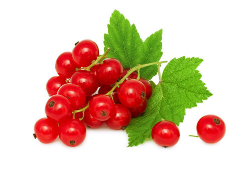 Buy Red Currant Online