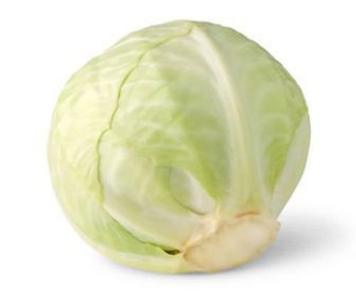 Buy Cabbage White Online