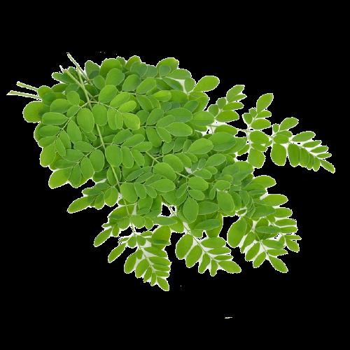 Buy Organic Moringa Leaves Online